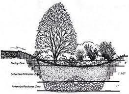 Rain Garden Ravenscourt Landscaping Design LLC