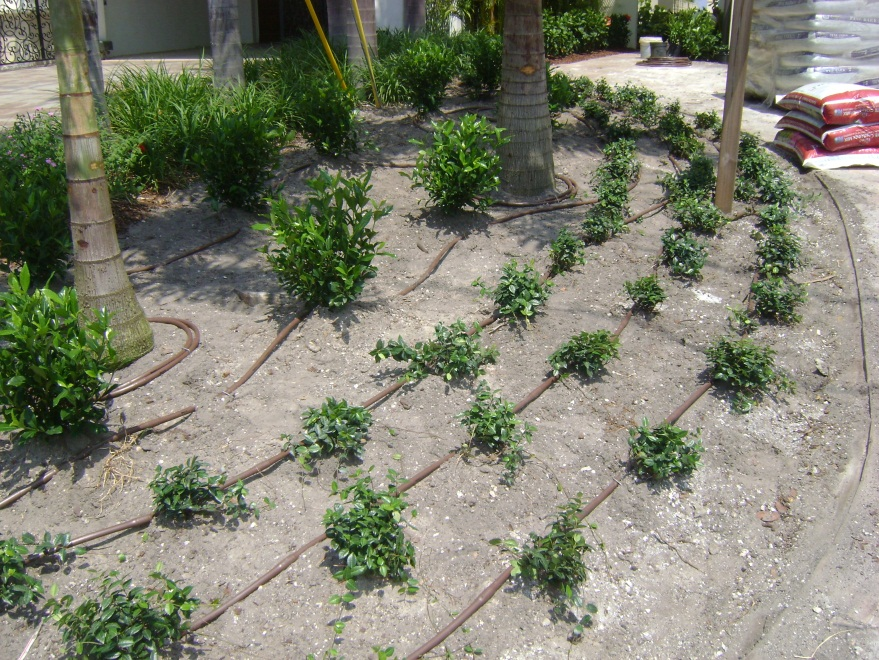 Drip Irrigation | Ravenscourt Landscaping & Design Llc